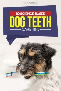 10 Sfaturi pentru îngrijirea dinților câinilor