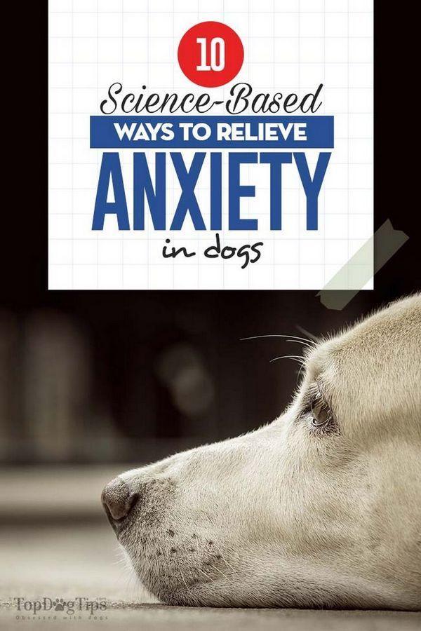 10 Modalități bazate pe știință pentru ameliorarea anxietății la câini