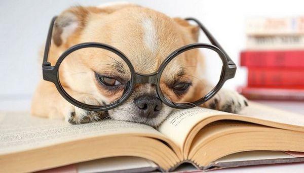 10 Cărți unice despre câini pe care toți câinii trebuie să le citească