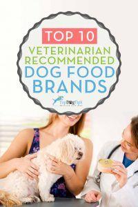 10 Vet recomandate branduri de hrană pentru câini, care sunt ieftine
