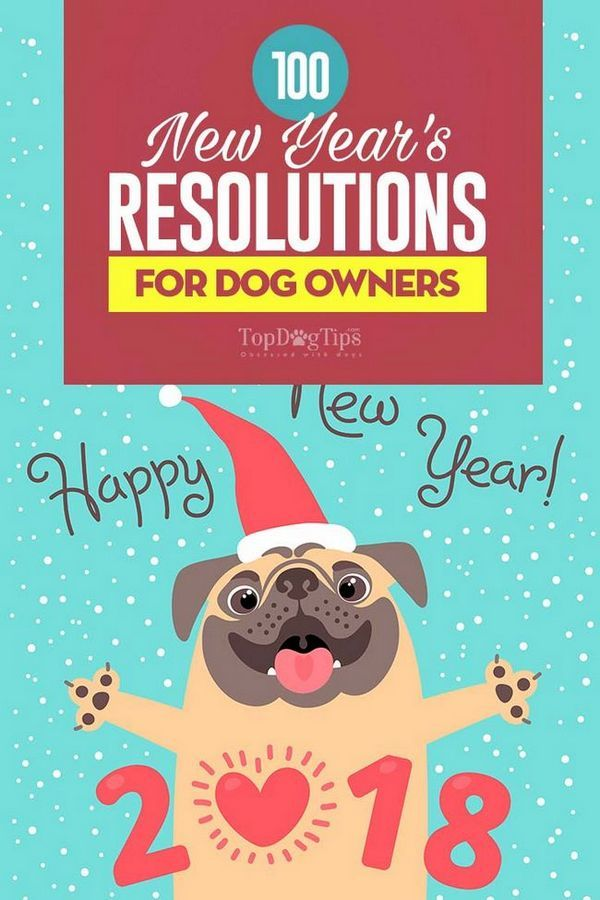 100 De rezoluții de anul nou pentru proprietarii câinilor