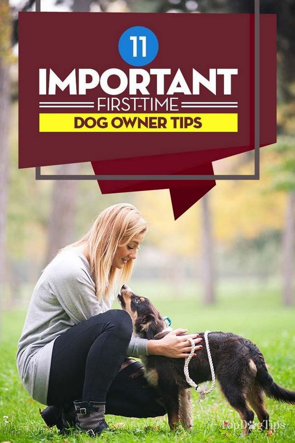 11 Sfaturi importante pentru proprietarii de câini de prima dată pentru viitori adoptatori
