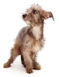 12 Semne câinele dvs. este stresat