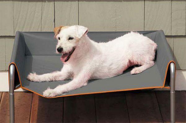 Lucruri de primăvară: Cot de câine în aer liber