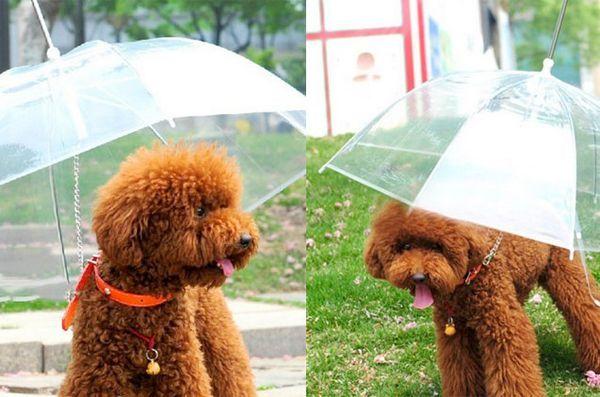 Lucruri de primăvară: umbrelă de companie