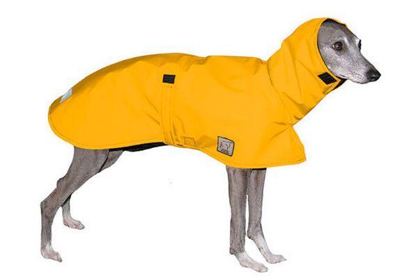 Lucrurile de primăvară: stratul de ploaie Doggie
