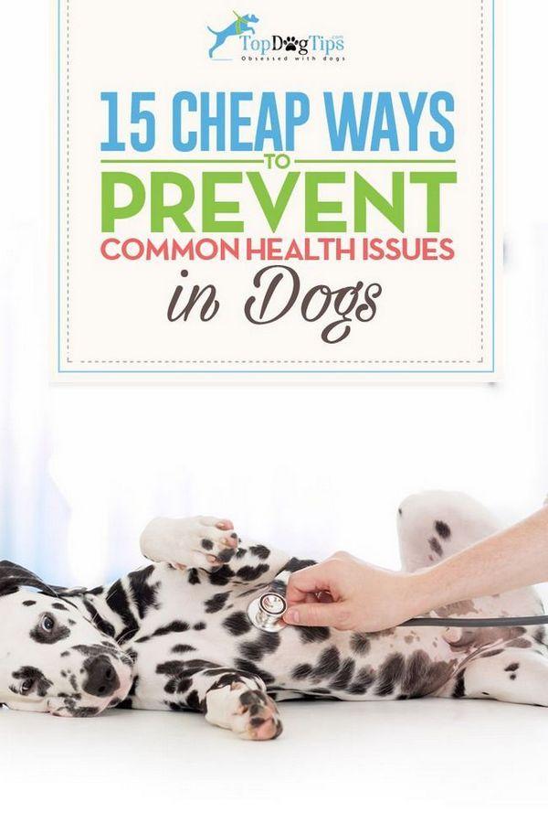 15 Modalități ieftine de prevenire a problemelor comune de sănătate la câini