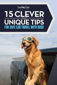 15 Sfaturi de siguranță pentru călătoriile cu câini în mașini