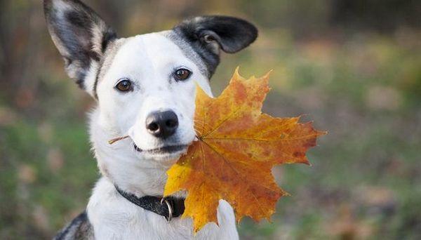 15 Moduri de a vă menține câinele sănătos în toamnă