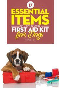 17 Elemente esențiale pe care să le aveți în kitul de prim ajutor pentru câini