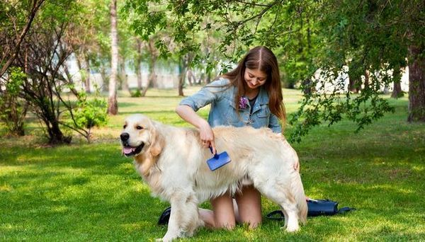 Cum să economisiți bani pe îngrijirea câinelui