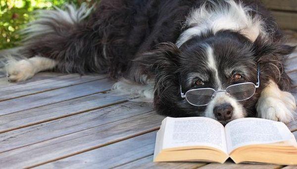 cele mai bune cărți pentru câini