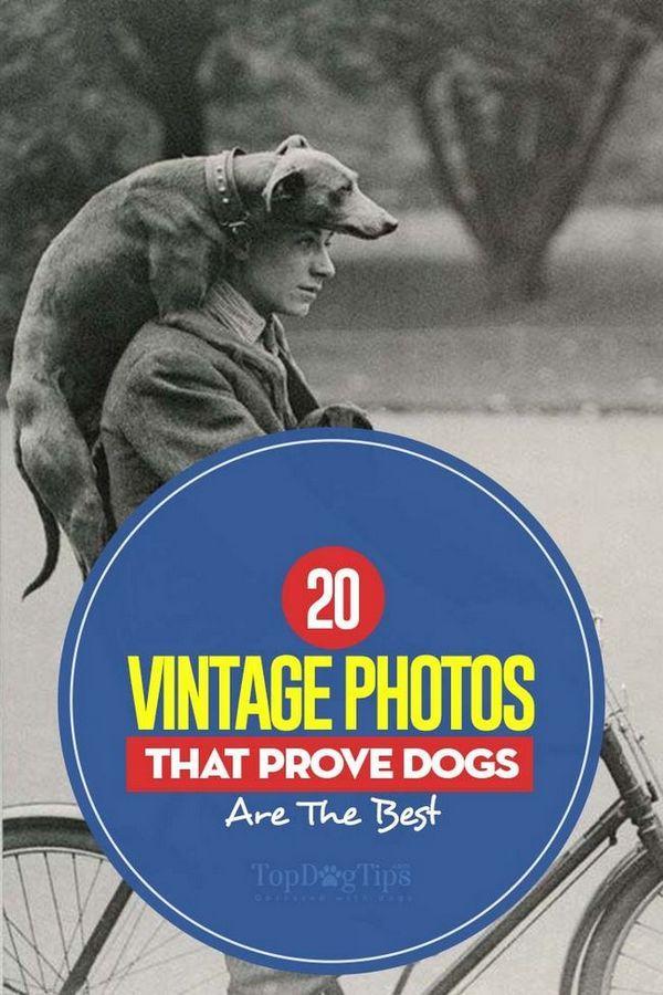 20 De fotografii vintage care dovedesc câinii sunt cele mai bune