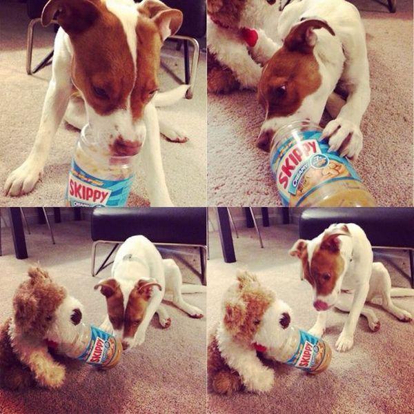 22 Fotografiile care dovedesc că câinii sunt mai inteligenți decât credeți
