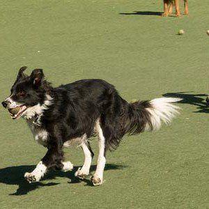 25 Cele mai frecvente probleme de comportament câine