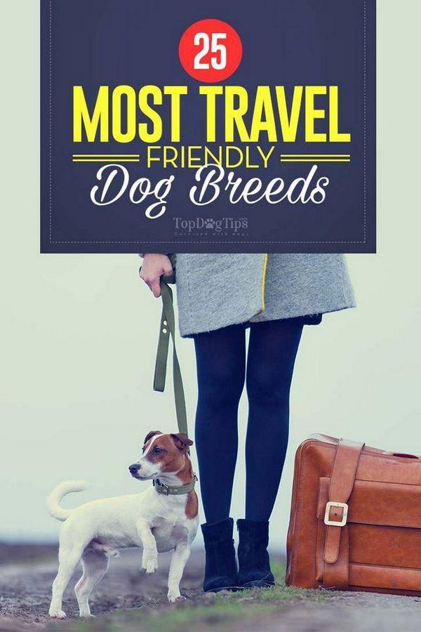 25 Cele mai multe rase de câini de călătorie prietenos