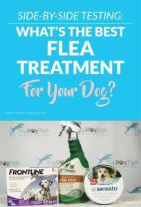Cele mai bune tratamente pentru fleasuri și biciuri pentru câini