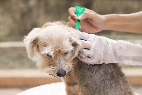 Cel mai bun tratament pentru fleasuri și căpușe pentru compararea câinilor