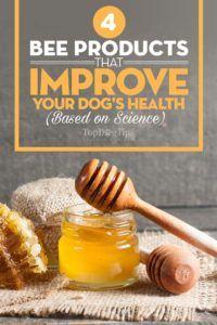 4 Produse de albine care pot îmbunătăți sănătatea câinelui dvs. (bazate pe știință)