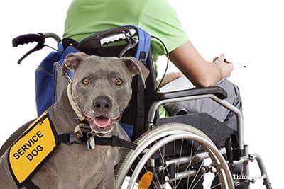 Câine de serviciu cu copil cu handicap