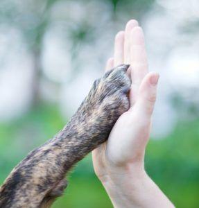 Beneficiile deținerii unui câine