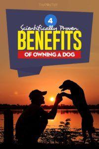 Beneficiile fizice și sociale ale deținerii unui câine