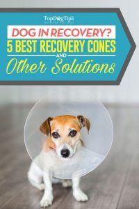 5 Cele mai bune conuri de recuperare a câinelui pentru a împiedica câinii să lingă rănile