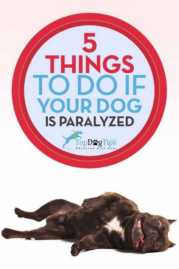 Ce să faceți dacă câinele dvs. este paralizat