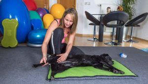 După diagnosticul de paralizie a câinelui