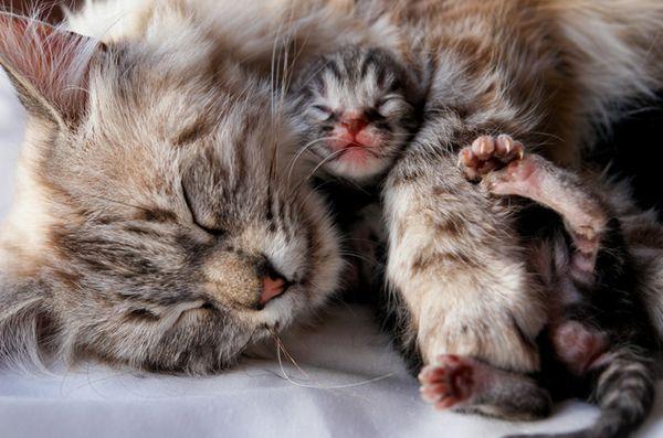 5 Sfaturi pentru o nutriție adecvată pentru pisica gravidă