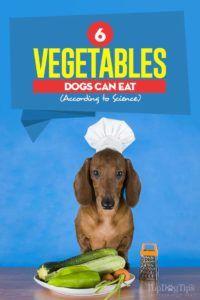 6 Câinii de legume pot mânca în funcție de știință