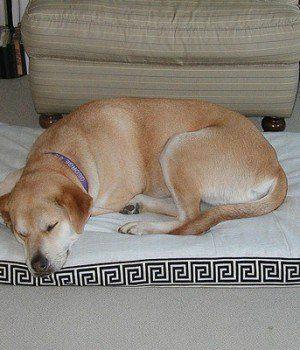 6 Sfaturile medicului veterinar cu privire la modul de îngrijire pentru câinii de vârf