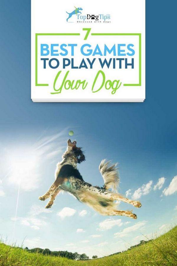 7 Cele mai bune jocuri pentru a juca cu câini
