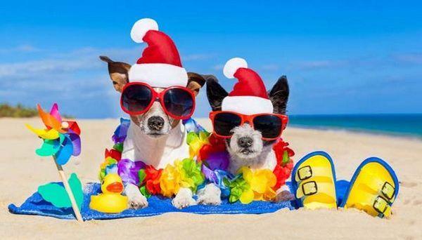 7 Idei despre cum să-ți petreci Crăciunul cu câinele tău