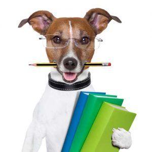 7 Tipuri de pardoseli pentru siguranța și sănătatea câinelui