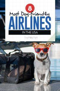 8 Cele mai multe companii aeriene prietenoase cu câini