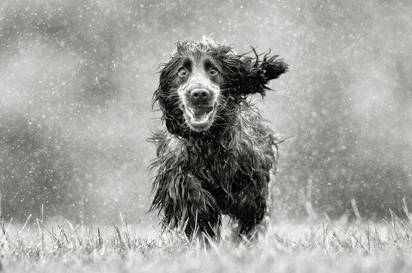 ploaie-dog-2