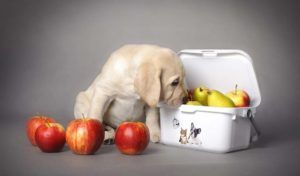 9 Superfoods pentru câini care își îmbunătățește sănătatea (conform științei)