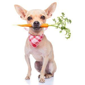 Superfoods pentru câini