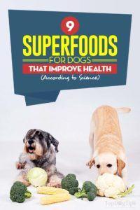 Superfoods pentru câini care le îmbunătățesc sănătatea