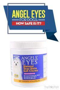 Angel ochii pentru câini revizuire: este sigur pentru animale de companie?