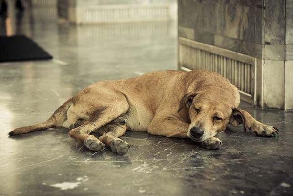 În prezent, abuzatorii de animale vor fi înregistrați la fel ca infractorii sexuali