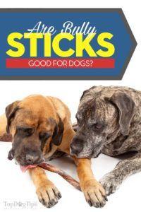 Sunt bastoanele bune pentru câini?