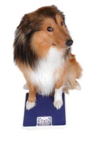 pierdere în greutate pentru câine nevoie
