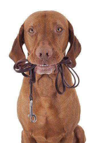 Câine Walker Salariul & Câini de mers pe jos
