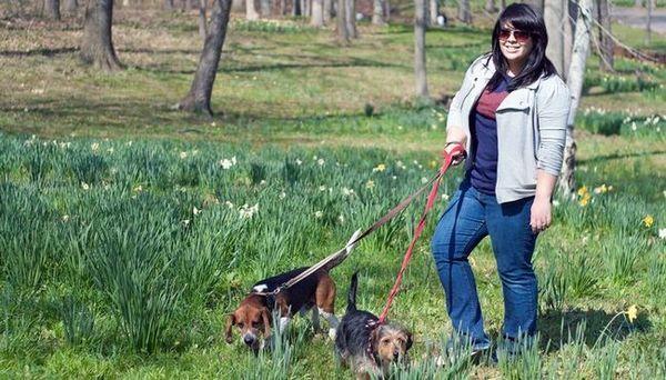 Unde și cum să alegeți asigurarea de mers pe jos de câini