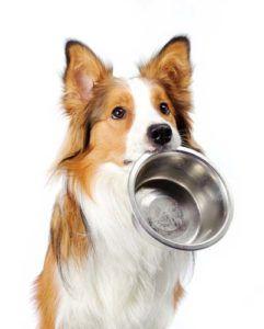 Controlul porțiilor pentru câinii supraponderali