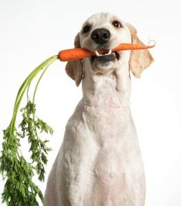 Produse alimentare de casă pentru câini supraponderali