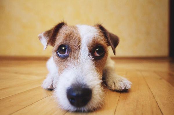 Autism la câini: mit sau motiv de îngrijorare?