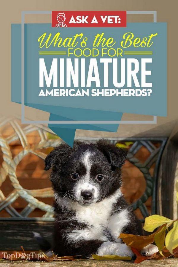 Cea mai bună hrană pentru câini pentru ciobănești americani: 10 mărci recomandate de veteran